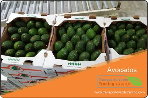 PRODUCTS - TRANSPORTE VERDE TRADING, MEXICAN EXPORTER