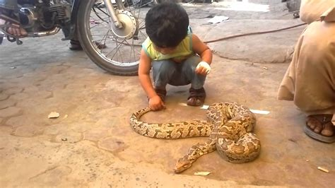 Baby Playing with real snake   Abbas Vs Snake - YouTube