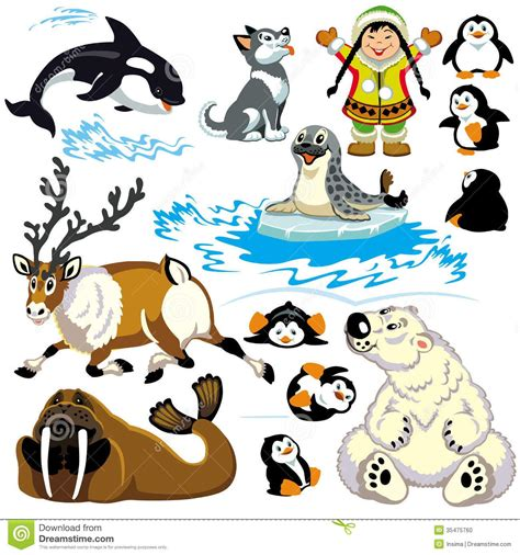 Image result for arctic animal clipart | Cartoon animals